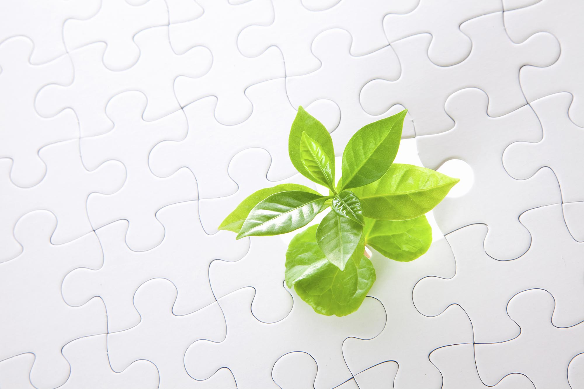 Growth out of puzzle